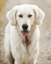 videnomhund165p