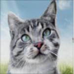 voksen minkas kat