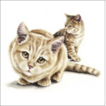 voksen supreme kat