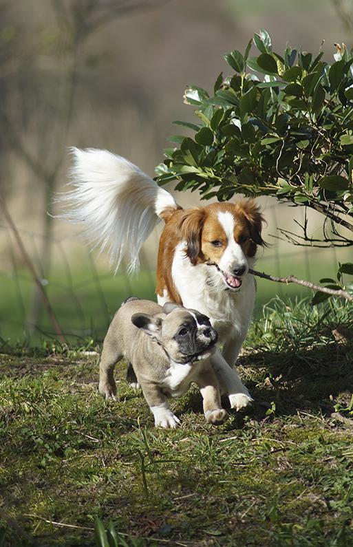 en hunds stofskifte