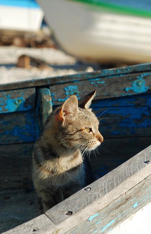 en kats stofskifte og behov
