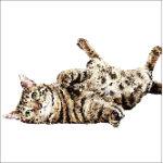 vådfoder kat